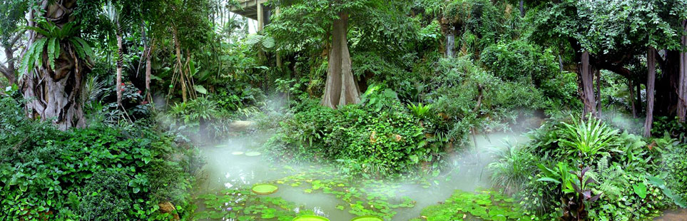 27度热带雨林