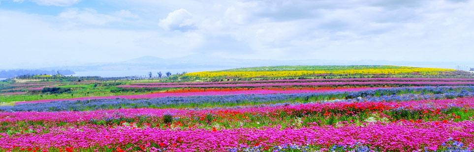 紫光色花仙子