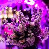 如何挑选婚礼跟拍摄影师